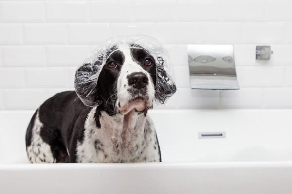Hund-in-Badewanne